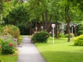 Roheline aed